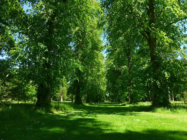 Lime-avenue